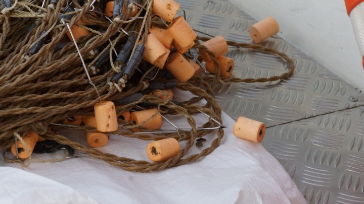 Двое рыбаков поймали 14 стерлядей у Заельцовского бора и получили за это срок