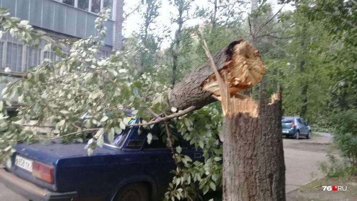 Проломило крышу машине: в Ярославле тополь во дворе упал на припаркованный автомобиль