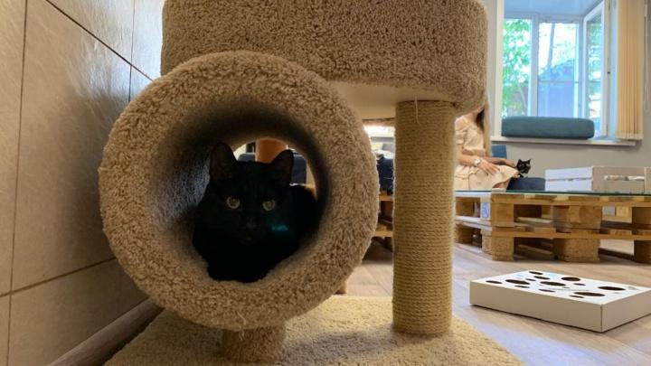 В Академгородке снова открылось необычное кафе с ласковыми котиками