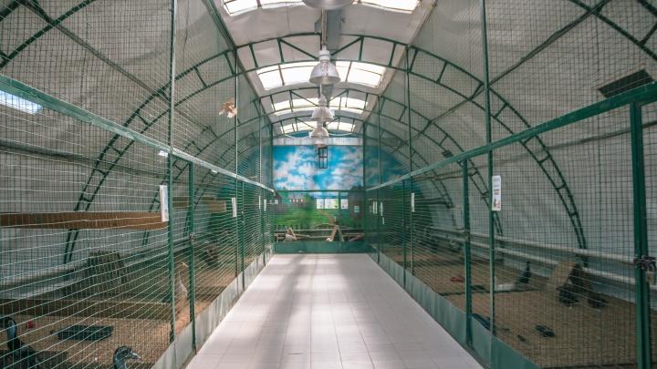 Стали известны итоги голосования о новой площадке для Самарского зоопарка