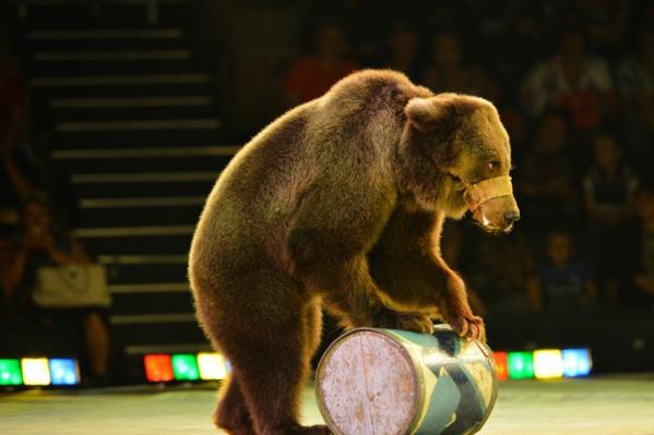 Сейчас медведи содержатся на базе в Октябрьском районе. У владельцев нет средств, чтобы оплатить электроэнергию и купить животным корм