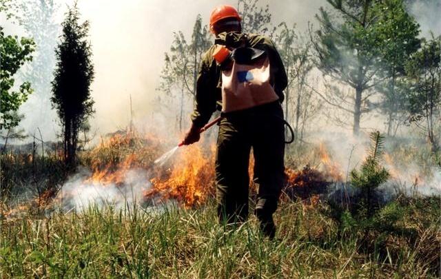 В Тюменской области горят 28 гектаров леса