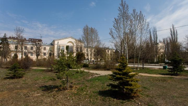 «Нам не нужны развлечения! Мы хотим зелени»: волгоградцы боятся вырубки деревьев в парке Гагарина