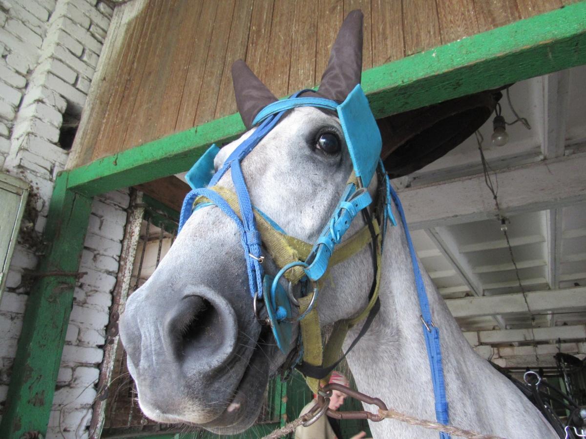 Лошадок можно будет посмотреть уже завтра, 6 октября