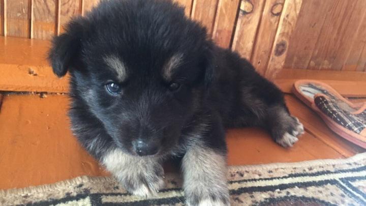 Уфимские спасатели вытащили упавшего в погреб щенка