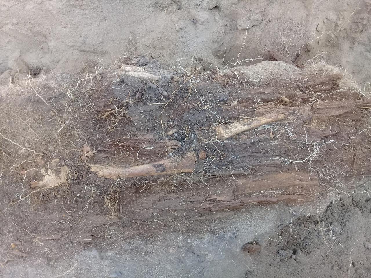 Так выглядит колода — ствол дерева, разрубленный надвое. В одной части вырубалось место для тела, вторая часть служила крышкой