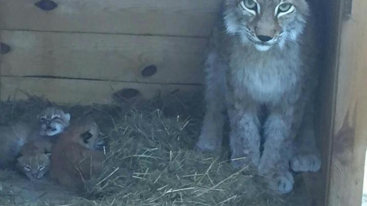 Семь редких животных в продаже в Красноярске по цене до 190 тысяч