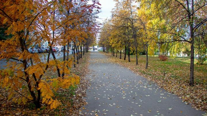 В Омской области к концу рабочей недели потеплеет до +20