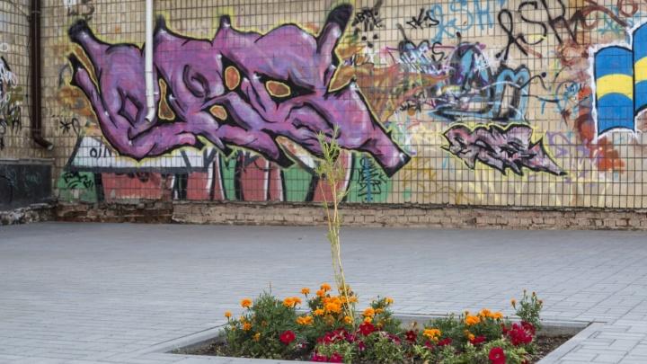 Новые деревья вместо вырубленных на юге Волгограда посадит озеленитель «Сказки» и «Гасителя»