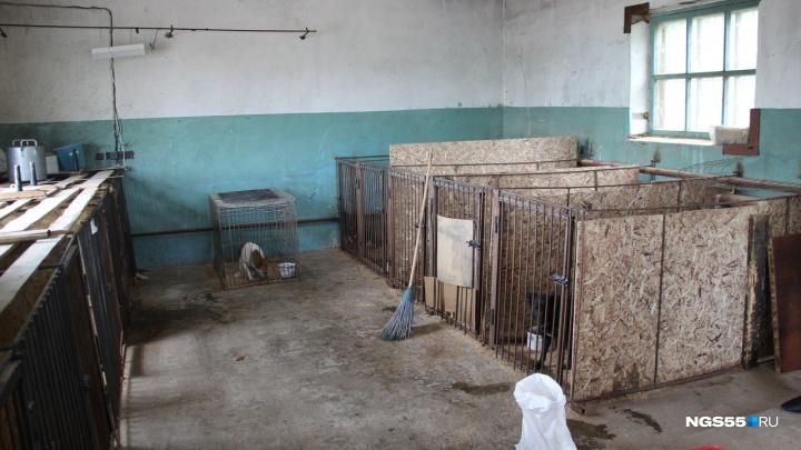 Омичи пожертвовали на ремонт ветеринарного блока для бездомных собак 200 тысяч рублей