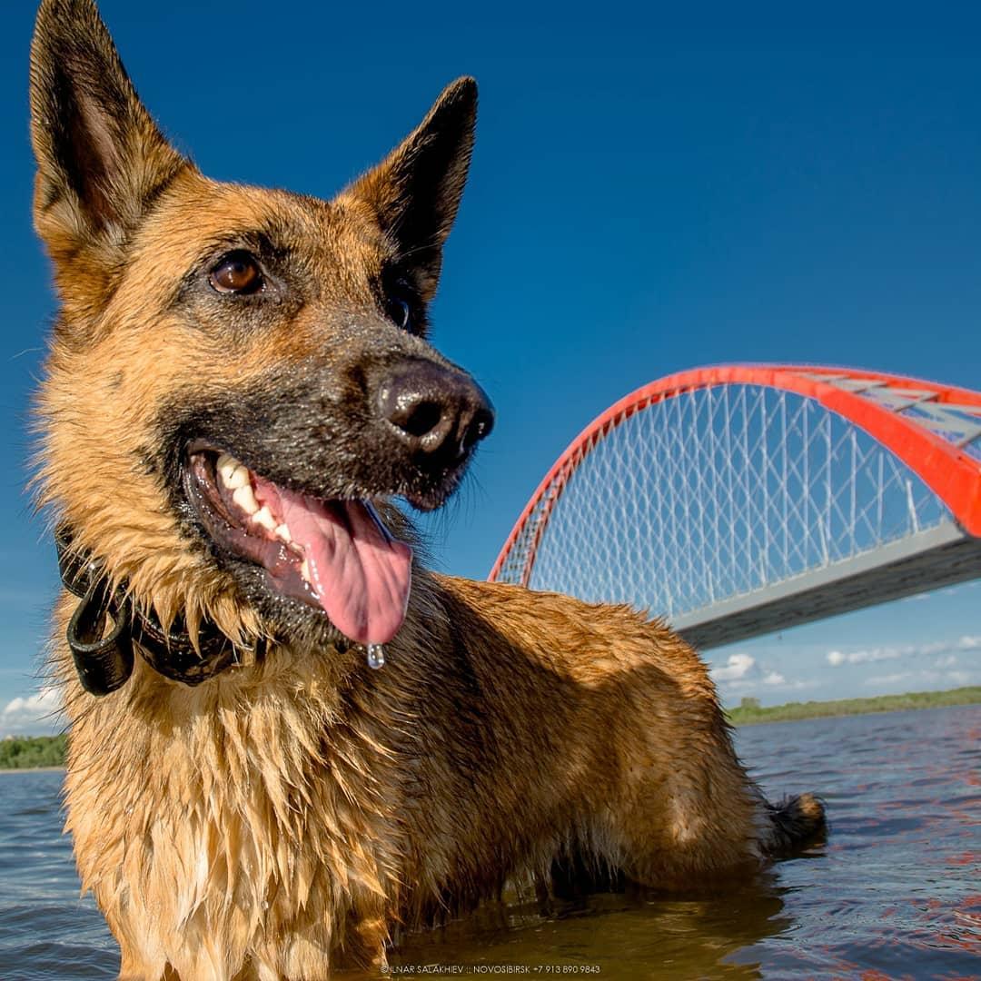 Будни Юки (так зовут собаку на фото) порой интереснее наших с вами