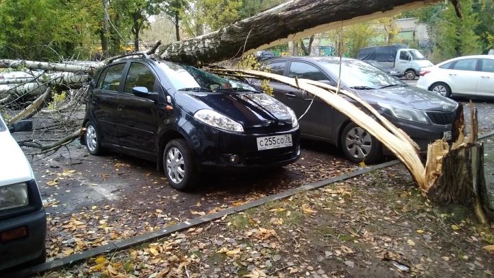 Смяло малютку: во дворе дома в Ярославле дерево расплющило «Чери»