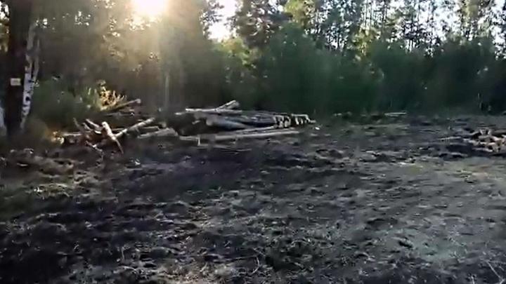 Туристы обнаружили вырубку леса за Черной сопкой