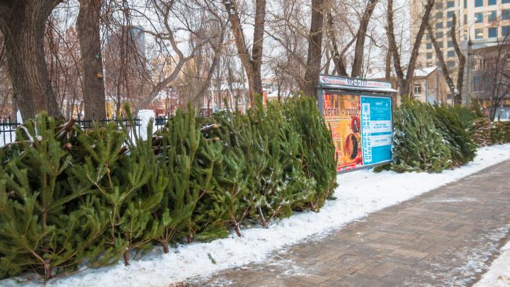 Раздадут щепки: в Самарской области придумали, что делать с выброшенными елками после праздников