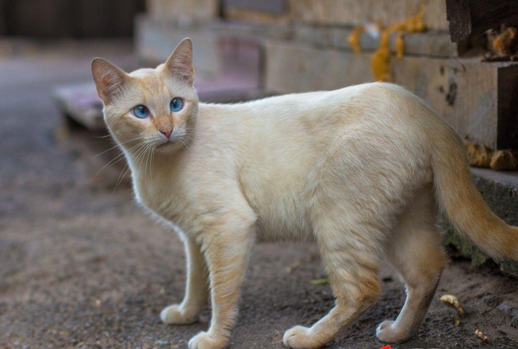 Брошенные животные нуждаются в терпеливых и заботливых хозяевах