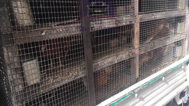 На Семафорной пьяный водитель въехал в грузовик с курицами