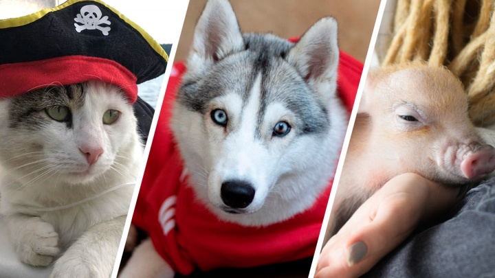 «У меня лайки»: 5 животных-блогеров, на которых вы захотите подписаться