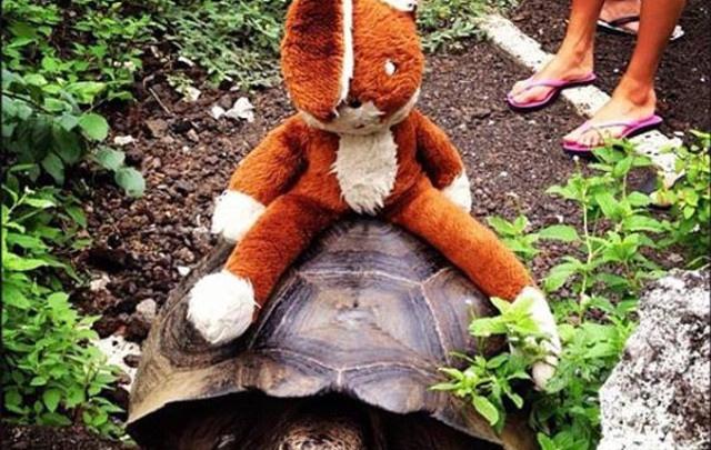 «Его подарили родители»: пермячка ищет игрушечного зайца, которого забыла в Барселоне