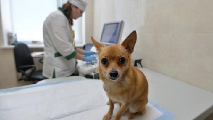 SpayDay: акция, о которой должен знать каждый любитель животных