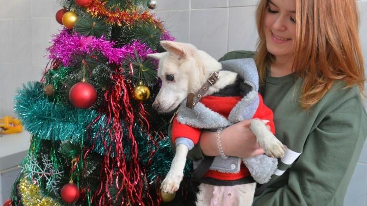 С новым пёсом! 10 историй собак из екатеринбургского приюта, которые мечтают найти хозяина