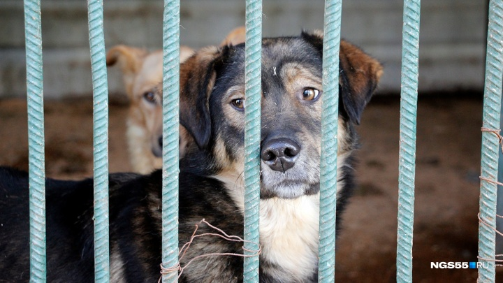 Отловщикам бездомных собак не выделят деньги на новые вольеры