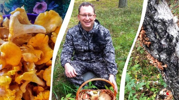 Опята ищите на пнях, а рыжики — в местах без травы: проверенные советы от тюменских грибников