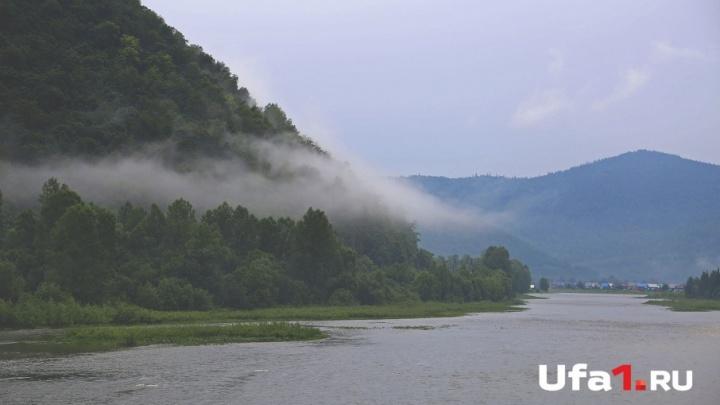 В Белорецке осудили лесничего и врио директора лесхоза за «распил» лесных насаждений