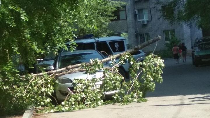«Приехали полицейские, разбираются»: в Волгограде на легковую машину возле школы обрушилось дерево