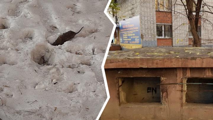 Жителей многоэтажки на Котельщиков пугают крысы из забытого советского бункера