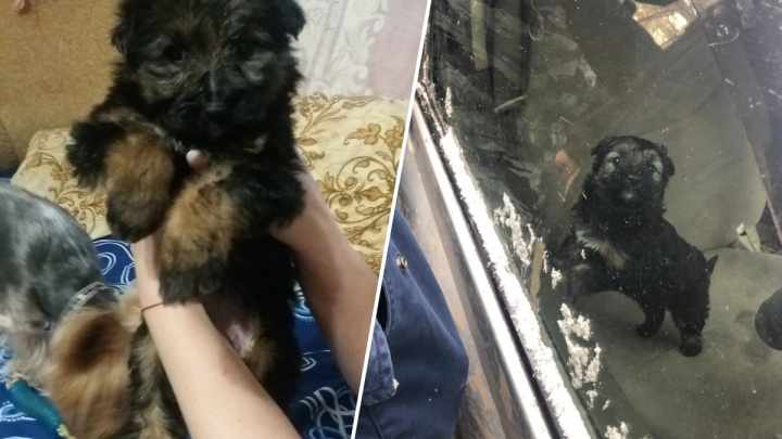 «Малышка крепкая, ест в четыре горла»: что известно о спасенном из машины щенке и хозяине