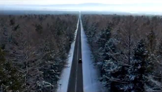 Ученый СФУ изучал сосны в Бурятии и снял красивый фильм о природе
