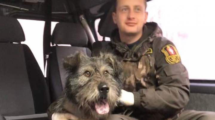 Директор Шарташского парка показал, что стало с собакой, которую бросили прикованной к дереву цепями