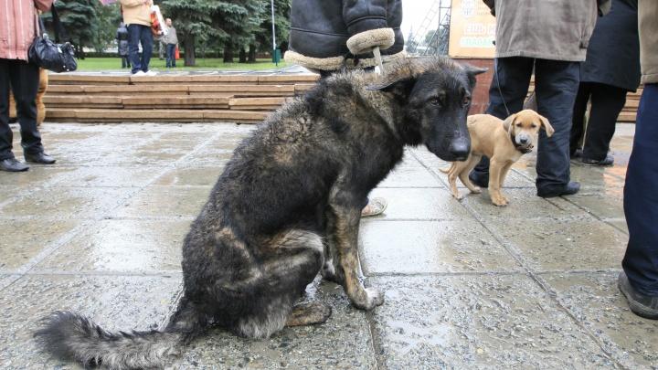 «Они тоскуют»: в Челябинске запустили проект по поиску потерявшихся животных