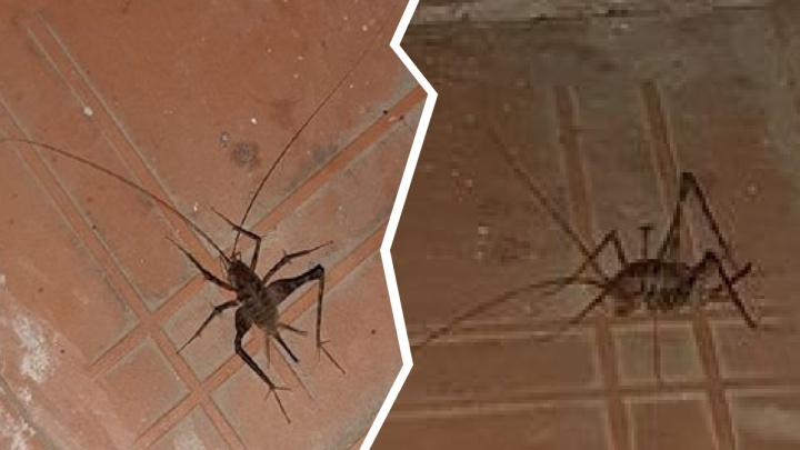 «Ребята, это мутация»: гигантское насекомое в подъезде ярославской многоэтажки напугало людей