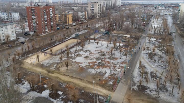 «Они умерли из-за запущенности»: в парке на юге Волгограда пустили под топор аллею тополей и вязов