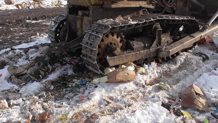 В Зауралье уничтожили полцентнера пекинской капусты и задержали более 20 тонн грецких орехов