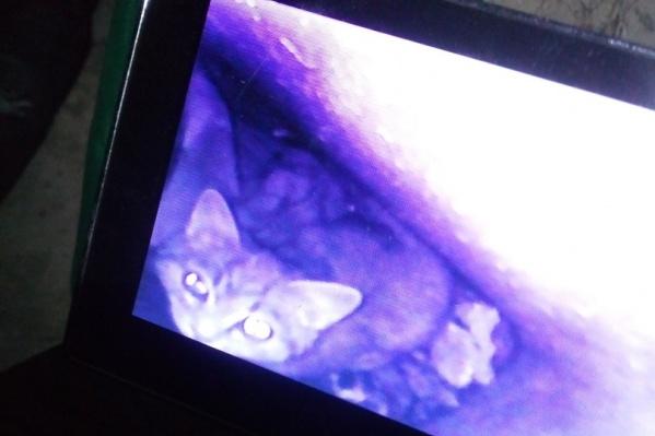 Котенок на экране, куда выводится изображение с эндоскопа