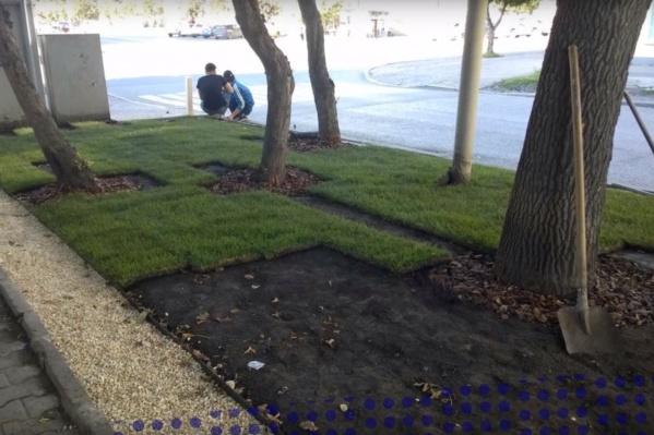 Вот так газон выглядел, когда его еще не доделали