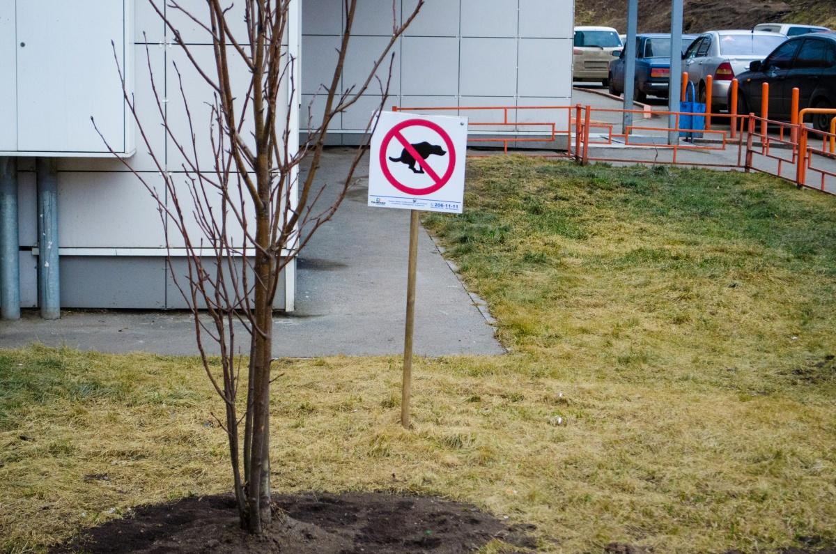 Собачье дело: где погулять с питомцем в Красноярске