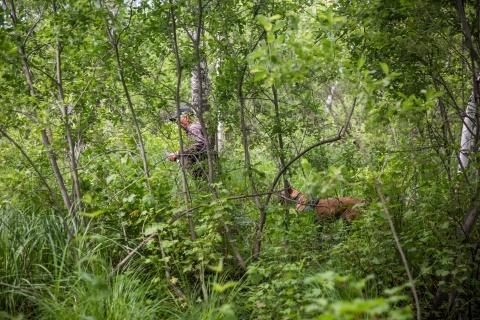 Для похода в лес нужно обязательно взять с собой телефон, нож и спички