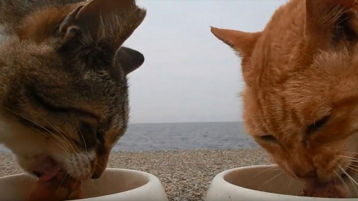 Невероятный прорыв: девушка из Ярославля сделала звездой японца, 8 лет снимавшего бродячих котиков