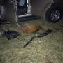 В Кургане во время охоты погибли двое: добыча и стрелявший