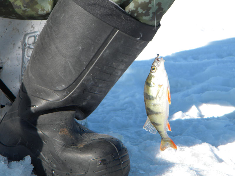 Пока толщина льда позволяет, самые отчаянные рыбаки устраивают чемпионат по подлёдному лову на мормышку