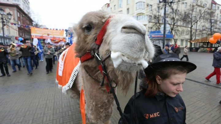 Верблюд на Кировке и выпивающие компании в сторонке: Челябинск скромно и быстро отметил Первомай