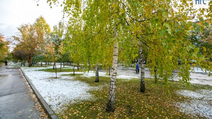 В ночь на 7 сентября в пригороде ожидаются заморозки