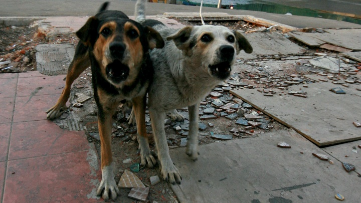 «Рвали на куски»: разъяренные псы напали на двух школьниц