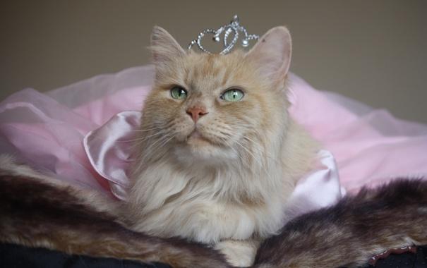 На Радиоле 106.2 FM продолжат выбирать «Главную кошку Екатеринбурга»