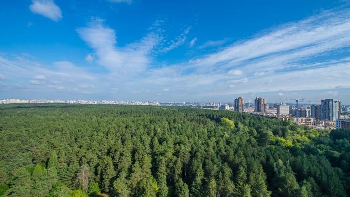 Челябинцам предложили оформить в собственность панорамные виды на лес и бассейн