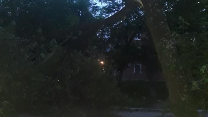 """«Штиль, а такие """"баобабы"""" падают»: во дворе на Уралмаше дерево рухнуло на дорогу"""