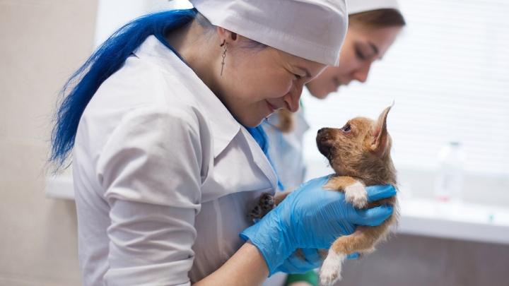 В Нижнем Новгороде откроют первый в РФ ветеринарный центр, где будут спасать отравившихся животных